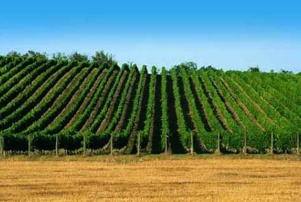 Enoregioni italiane: Colline Pesaresi