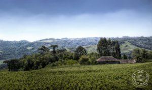 Dall'Europa al Brasile: la cultura del vino non ha confini