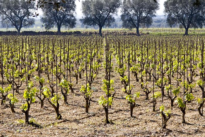 Enoregioni italiane: Salento