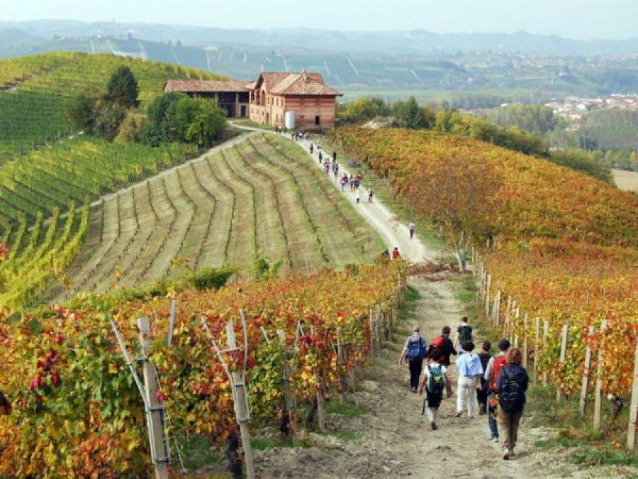 Denominazioni d'origine e turismo del vino