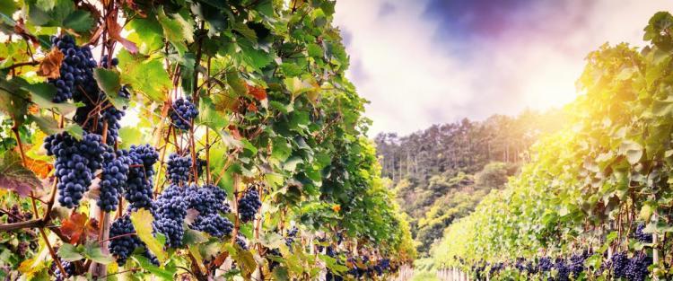 Passeggiando per le vie delle vigne in città