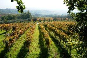 Valorizzazione dei vini vesuviani: scende in campo il mondo accademico