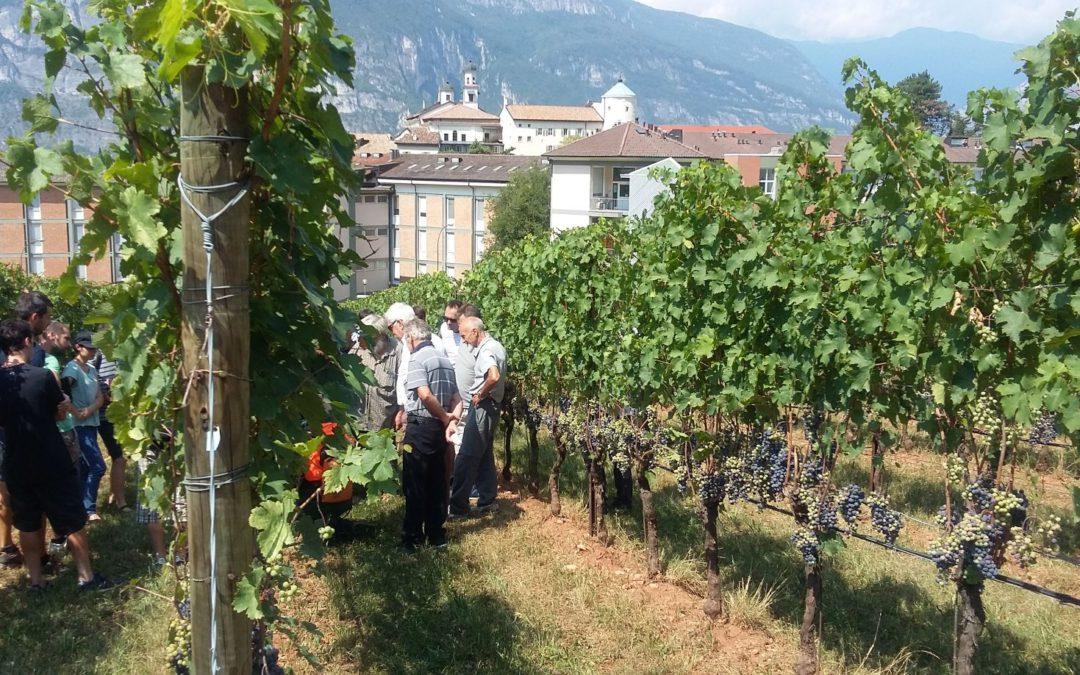 1000 ettari di vigneto bio in Trentino