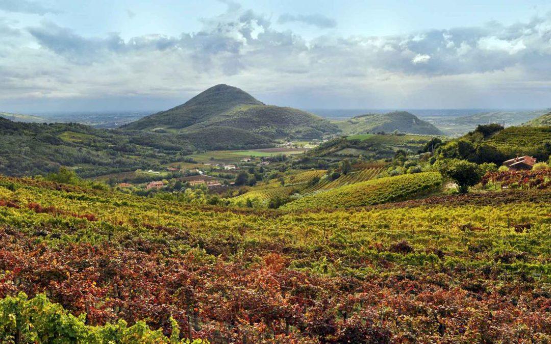 Vinarius: i vini dei Colli Euganei protagonisti nelle enoteche italiane