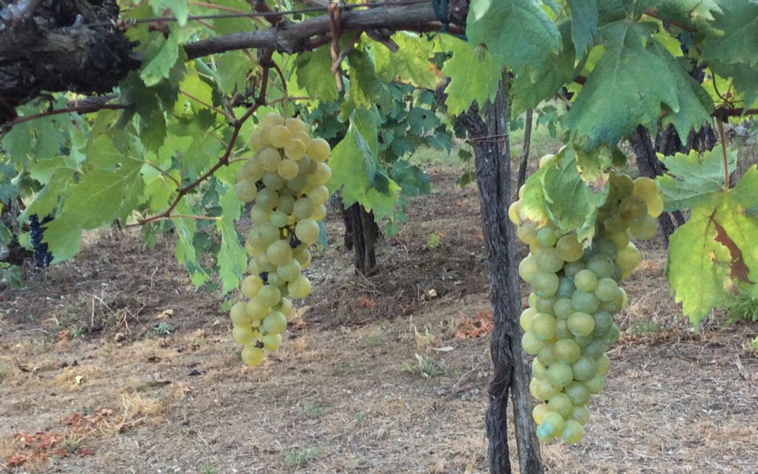 L'arte di fare vino