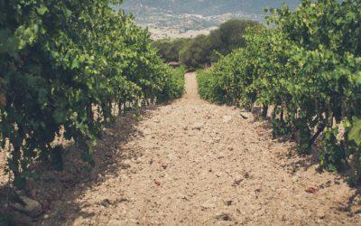Alla ricerca del vino più raro