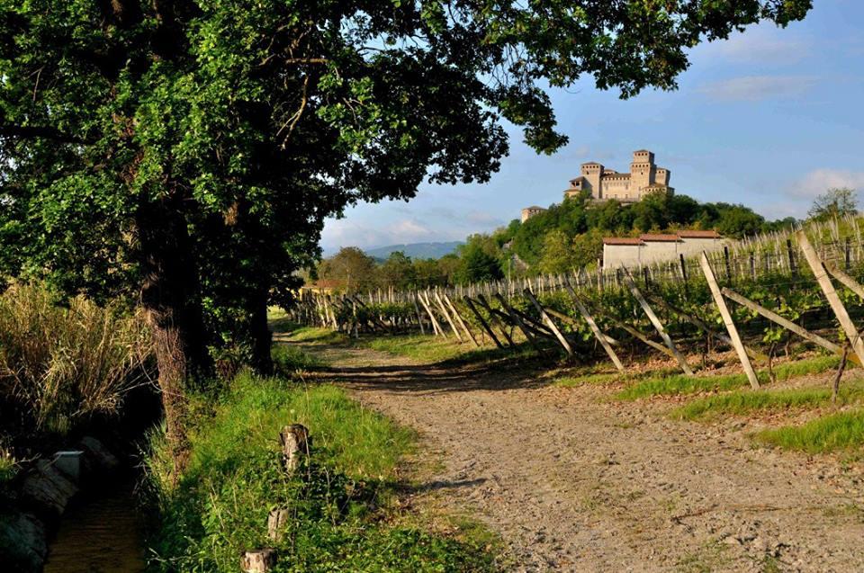 Parma e i suoi vini