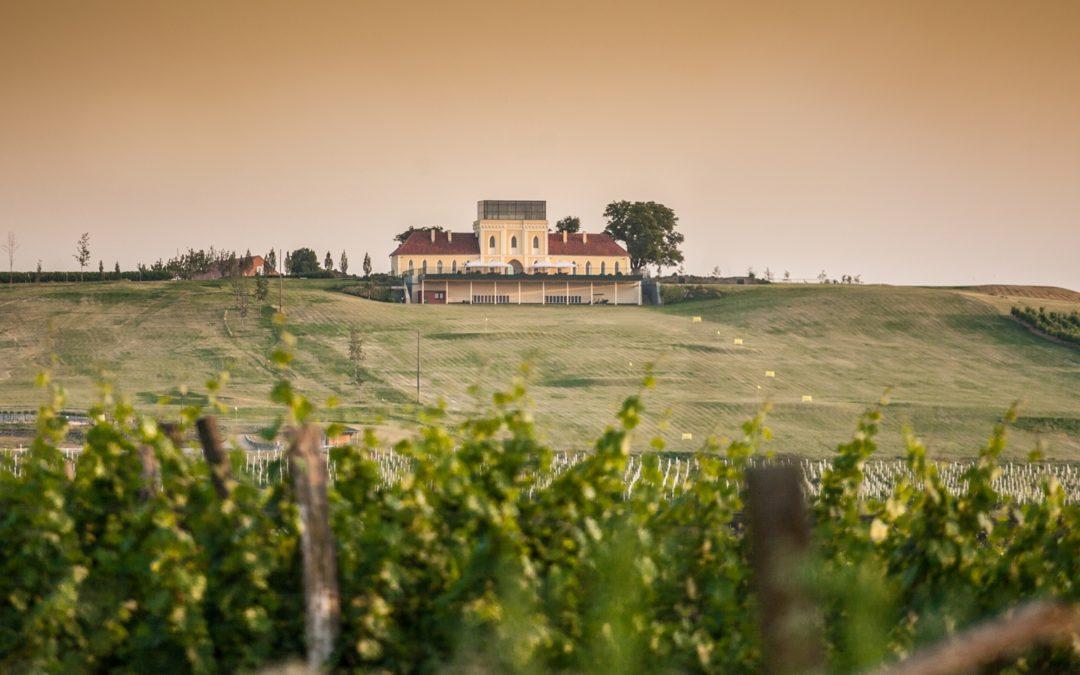 Croazia, la terra del buon vino