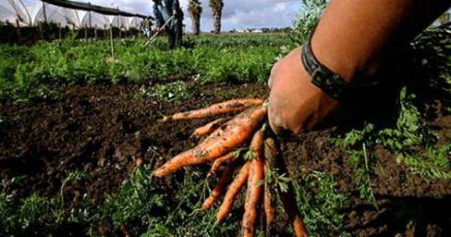 Decreto agricoltura sociale