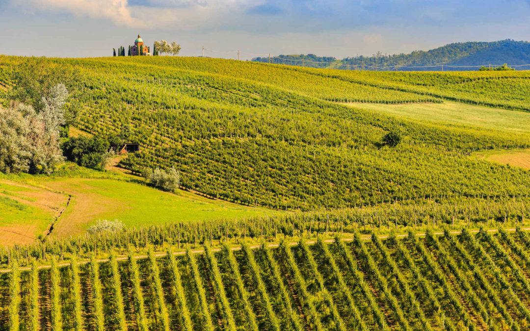 Un vino che viene dalla Terra Mater
