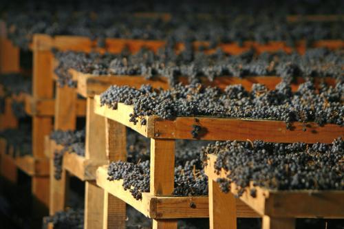 Montefalco_appassimento (Consorzio Tutela Vini Montefalco)