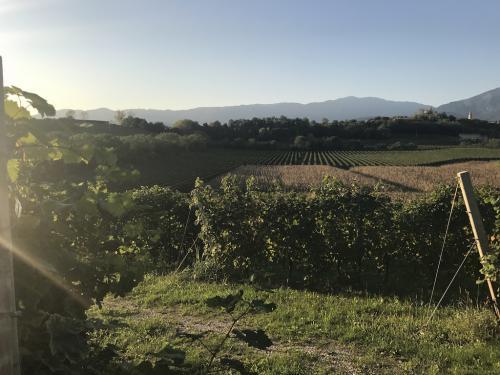 Prosecco_paesaggio con siepi