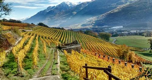 Valle d'Aosta_viticoltura eroica