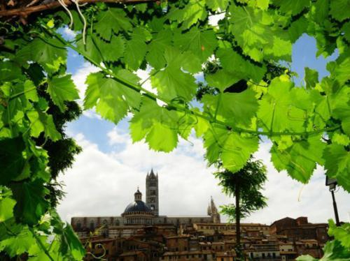 Siena_Convento S.Domenico