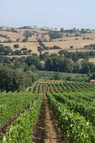 DOC Maremma Toscana