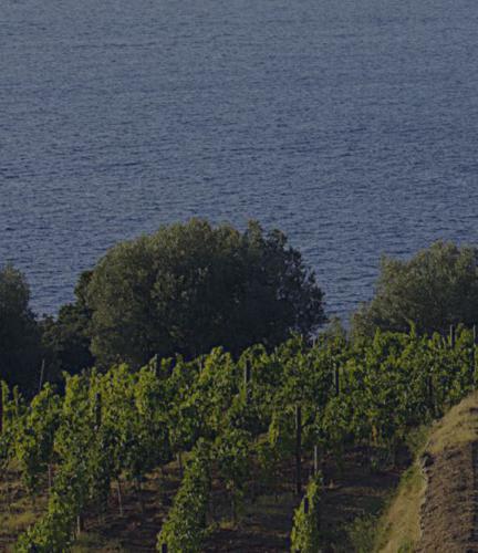 Maremma Toscana doc_vigneti sul mare