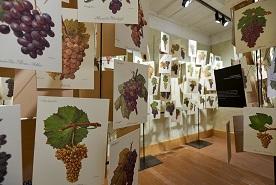 Museo_Vineum_Meersburg_LR_credits@Vineum