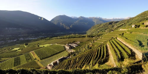 Terrazzamenti Media Valtellina (Lombardia)