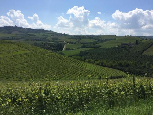 Vigneti_Grinzane Cavour (Piemonte)