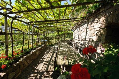 Viti dei Giardini di Castel Trauttmansdorff (Alto Adige)