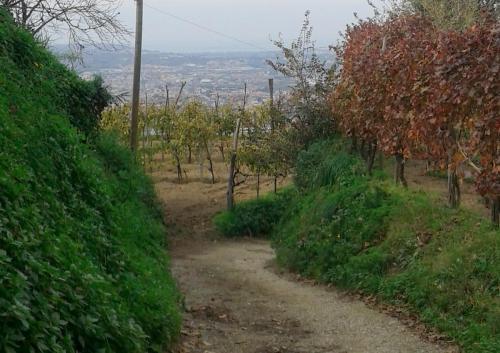 Le Vigne Azienda Agricola Quaranta (Napoli) 1