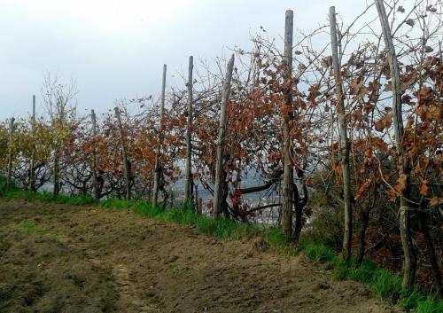 Le Vigne Azienda Agricola Quaranta (Napoli) 2