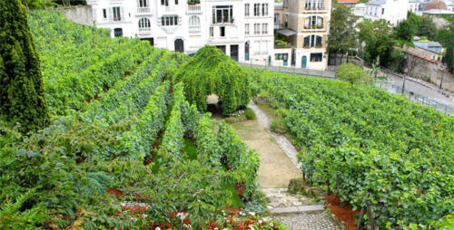 Le Vignoble de Montmartre (Parigi, Francia)