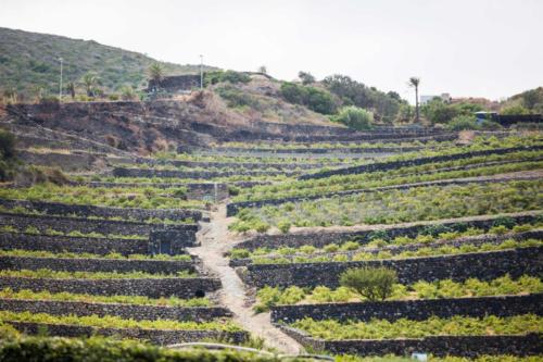 Terrazzamenti Pantelleria (TP)(Sicilia)