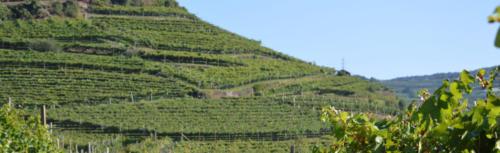 Vigneti terrazzati Giovo (TN) (Trentino)
