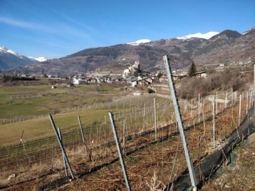 Paesaggio vitato1_Legrain_Saint-Pierre (AO)(Valle d'Aosta)