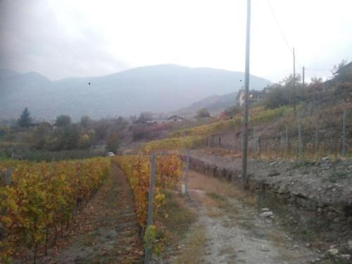 Paesaggio vitato3_Legrain_Saint-Pierre (AO)(Valle d'Aosta)