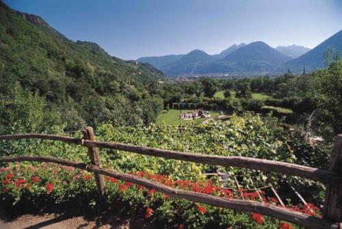 Vigneti dei Giardini di Castel Trauttmansdorff (Alto Adige)(2)